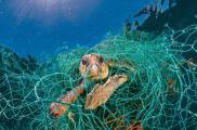 2plastic-waste-single-use-worldwide-consumption-animals-2.adapt.1900.1