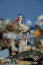 plastic-waste-single-use-worldwide-consumption-animals-4.adapt.590.1